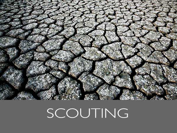 Scouting_TH600x450